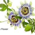 NATURAL-SLEEP-AID-Melatonin-Passion-Flower-Montmerency-Tart-Cherry-Lemon-Balm-Chamomile-and-More-Lullaby-Contains-All-Natural-Ingredients-Drug-Free-Herbal-Sleep-Aid-No-Side-Effects-Non-Habit-Forming-F-0-2